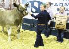Grand Champion Steer brings in 20K More than $374,000 raised before add-ons
