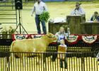 Grand Champion Steer